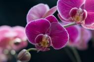 花园里漂亮的鲜花图片_14张