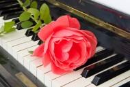 玫瑰花朵与钢琴图片_16张