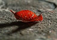 干枯樹枝樹葉圖片_34張