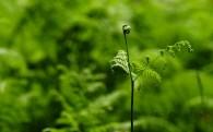 植物綠葉圖片_20張