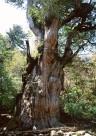 古老的树干图片_19张