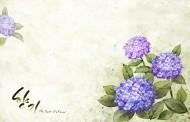 韩国浪漫紫色花朵背景图片_15张