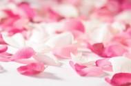 粉红花瓣图片_12张