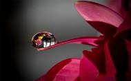 花瓣上的晶莹露珠图片_8张