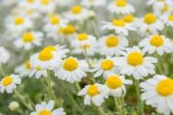 花丛中的花朵野花特写图片_15张