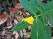 黄色的花朵图片_14张