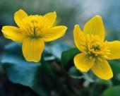 漂亮的黄色野花图片_14张