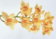 黃色花朵圖片_19張