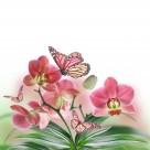 各种颜色的蝴蝶兰图片  _16张