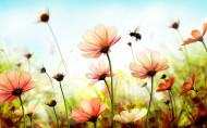 简约唯美的花卉图片_10张
