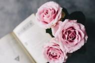 嬌滴的粉玫瑰圖片_17張