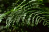 蕨类植物图片_15张