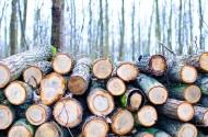 被砍伐的树木图片_15张