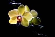 光影下的蘭花圖片_8張