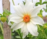 美麗的蘭花圖片_10張