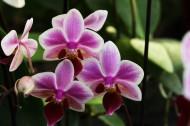 美麗的蘭花圖片_9張