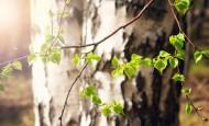 林间生机勃勃的树木图片_15张
