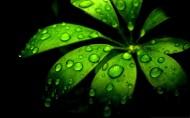 植物上晶莹的露珠图片_24张