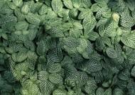 绿色植物背景图片_22张