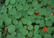 綠色植物背景圖片_25張