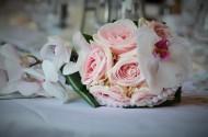 粉色的玫瑰花图片_17张