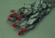 玫瑰干花圖片_5張