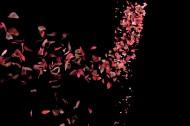 玫瑰花瓣图片_7张
