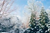 美丽的雪松图片_14张