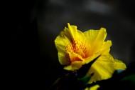 綠葉叢中的美人蕉圖片_7張