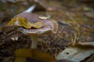 丛林中的野生蘑菇图片_8张