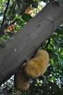 木菠萝植物图片_6张