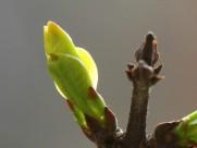春天的嫩芽图片_12张