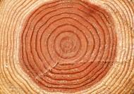 树木年轮图片_24张