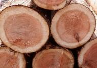 樹樁木材圖片_47張