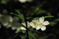 蔷薇花图片_10张