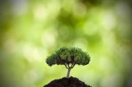 清新绿色植物图片_15张