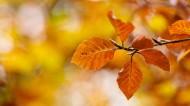 秋天唯美树叶图片_12张