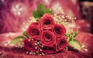 娇艳欲滴的玫瑰图片_6张