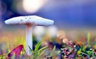 山上野蘑菇图片_8张