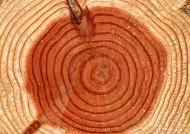 树的年轮图片_45张