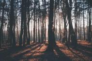 树干高清图片_14张