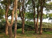 阳光下的树木图片_11张