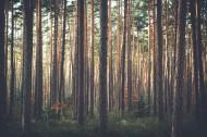 笔直生长的树木图片_13张