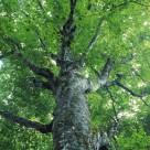树木倩影图片_25张