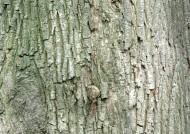 树皮图片_20张