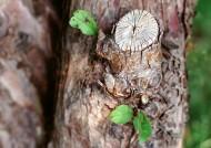 樹皮紋理圖片_89張