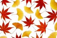 樹葉背景圖片_29張