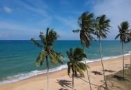 挺拔的的椰树图片_15张