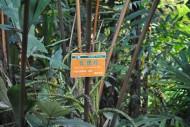 瓦理棕植物图片_2张