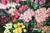 唯美靓丽的鲜花和花束图片_14张